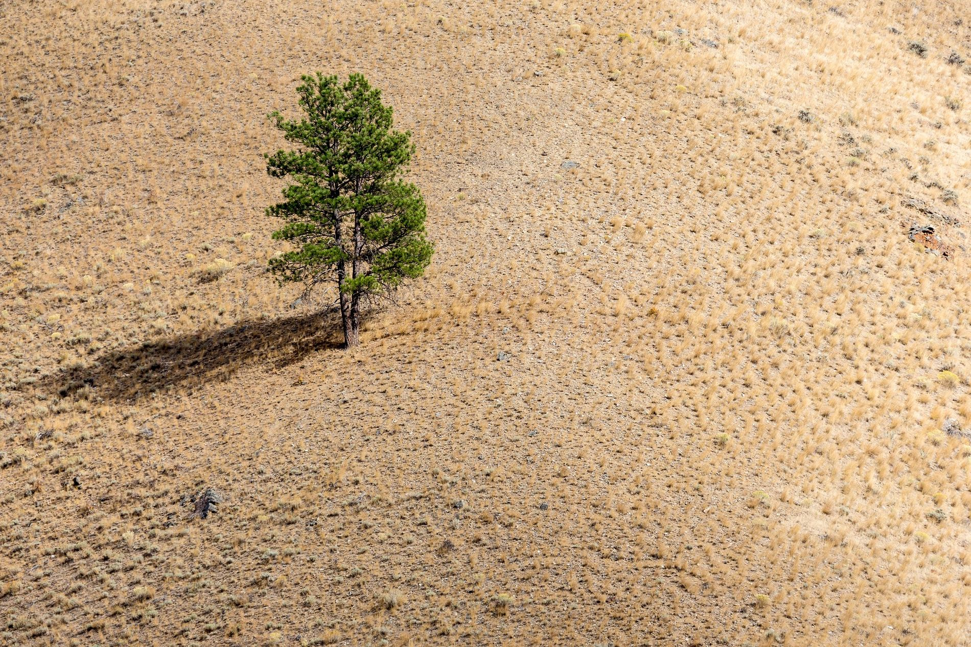 Trees Call for Help—And Now Scientists Can Understand