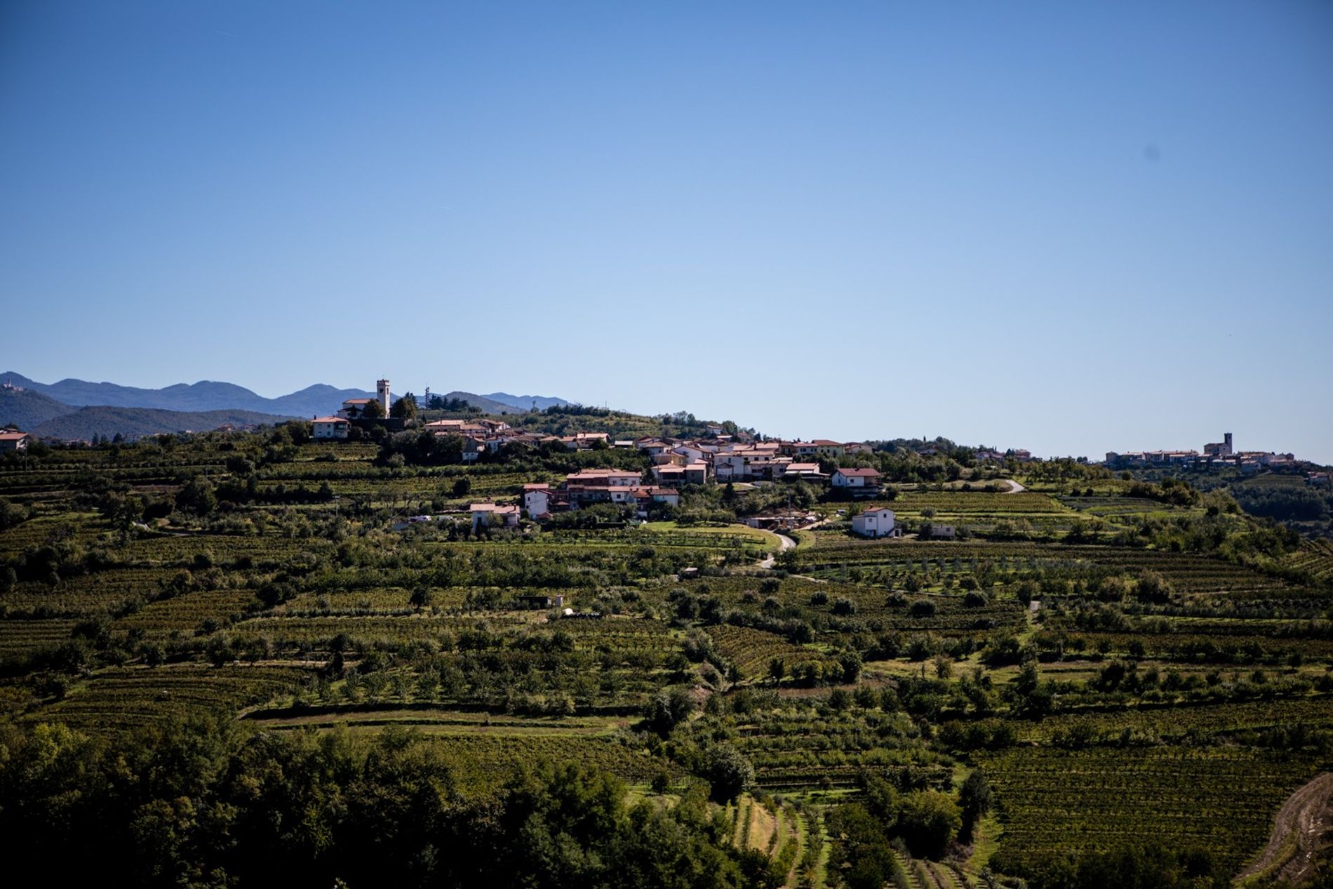 The rolling hills surrounding the village of Višnjevik are reminiscent of the Italian wine-country.