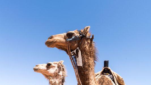 Photo gallery: Jordan's nomadic Bedouins
