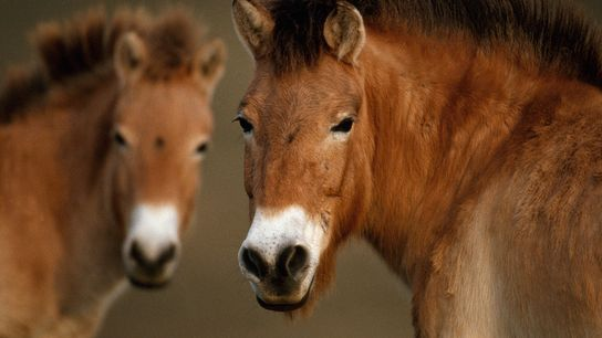 oldest genome sequenced ancient horse