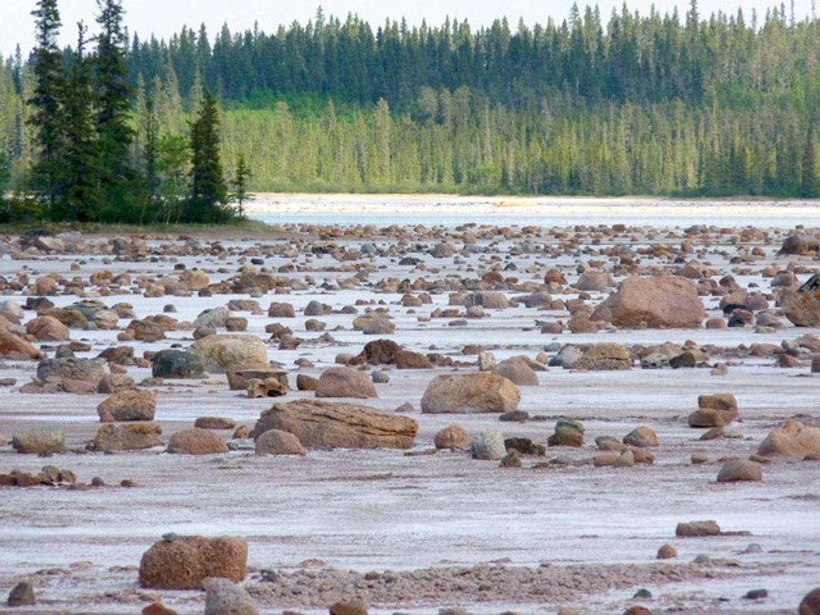 Canada: The salt plains of Wood Buffalo