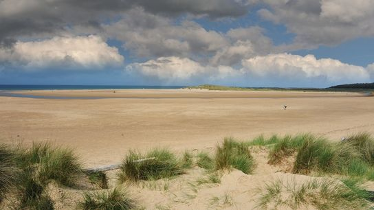Holkham beach is one of the great gems on the Norfolk coast that stretches from sand ...
