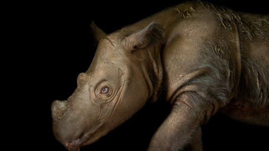 RELATED: SEE 10 OF THE RAREST ANIMALS ON EARTH