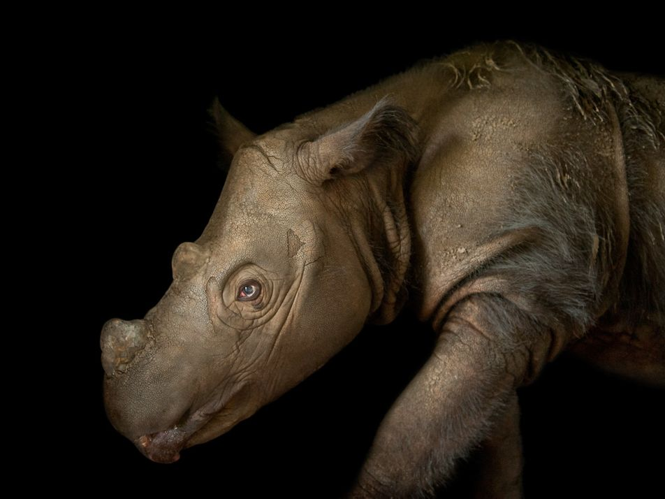 Stunning Pictures: Ten of the Rarest Animals on Earth