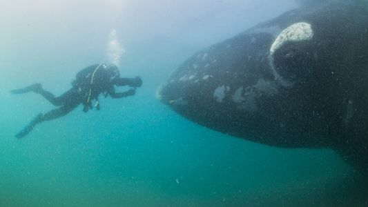 Photographer Captures Astonishing Images of Southern Right Whales - 1