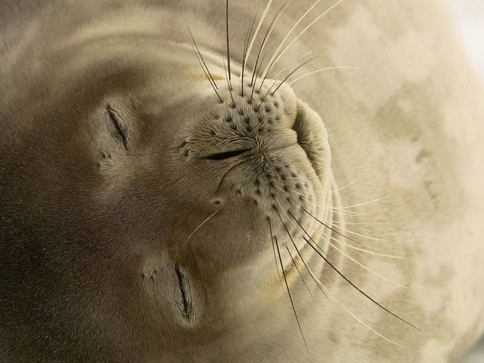 Images of Antarctica's most charismatic wildlife