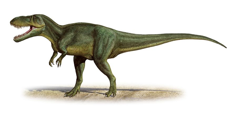 Scientists initially thought the T. gurneyi fossils belonged to related species Torvosaurus tanneri, pictured.