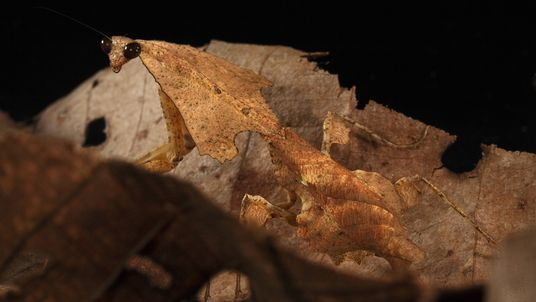 Photos: Masters of Disguise—Amazing Insect Camouflage