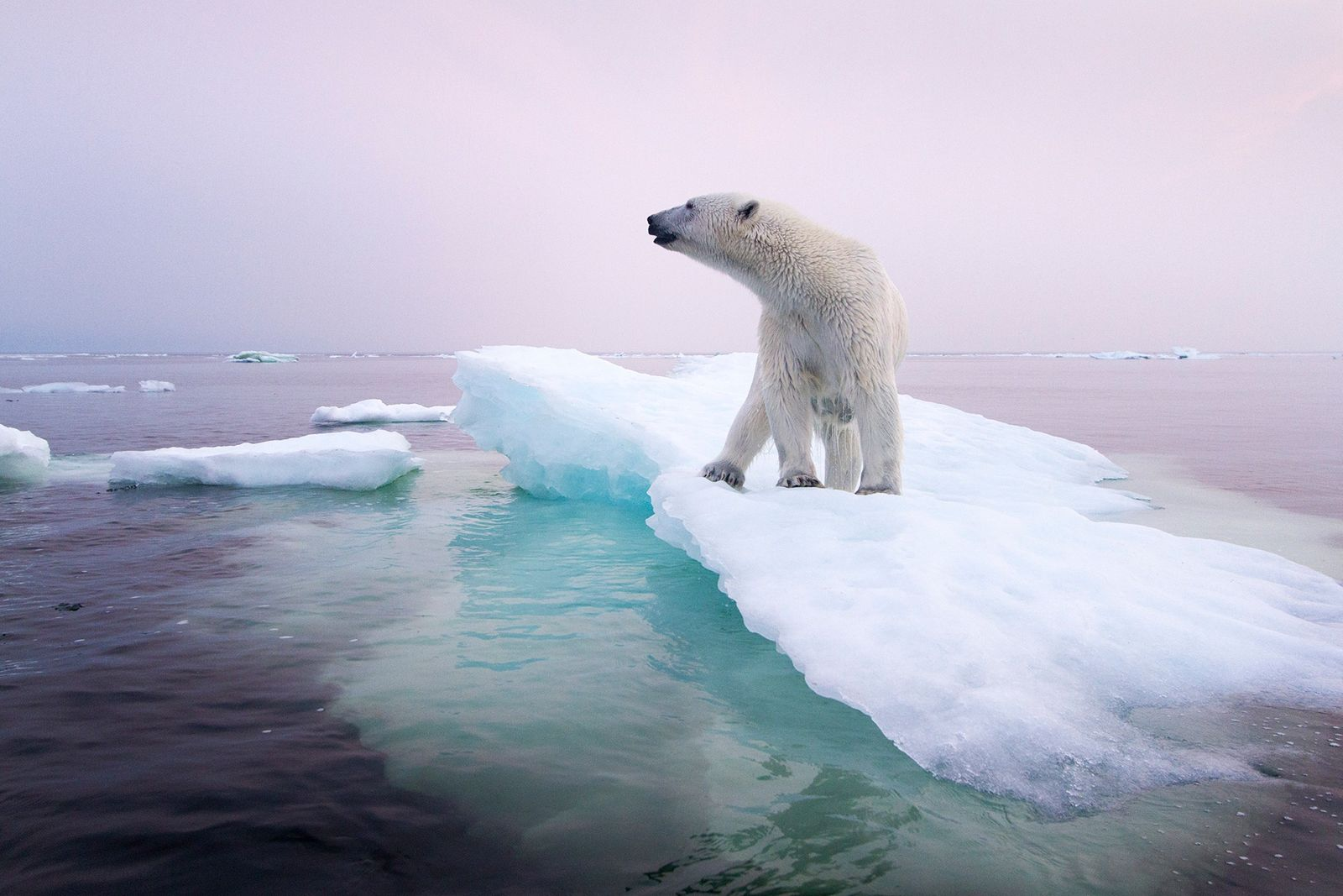 polar bear climate change story 1200