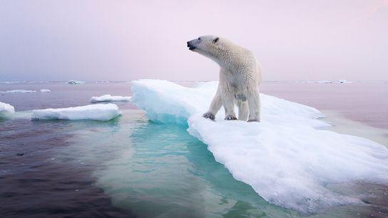 polar bear climate change story 1200