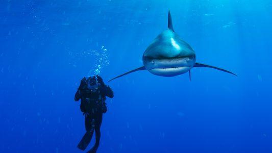 Gallery: Extraordinary Sharks from Around the World