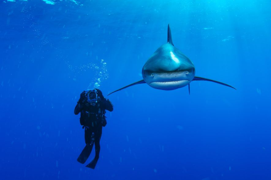 See 10 Dramatic Pictures of Sharks
