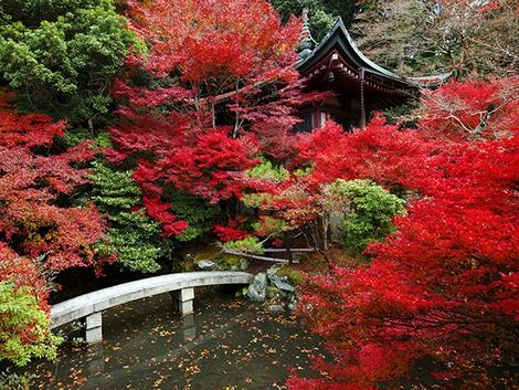 Top 10: Places to See Autumn Leaves