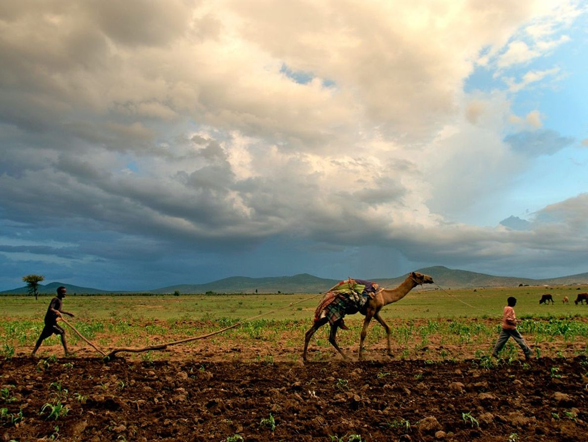 Farmers With Camel