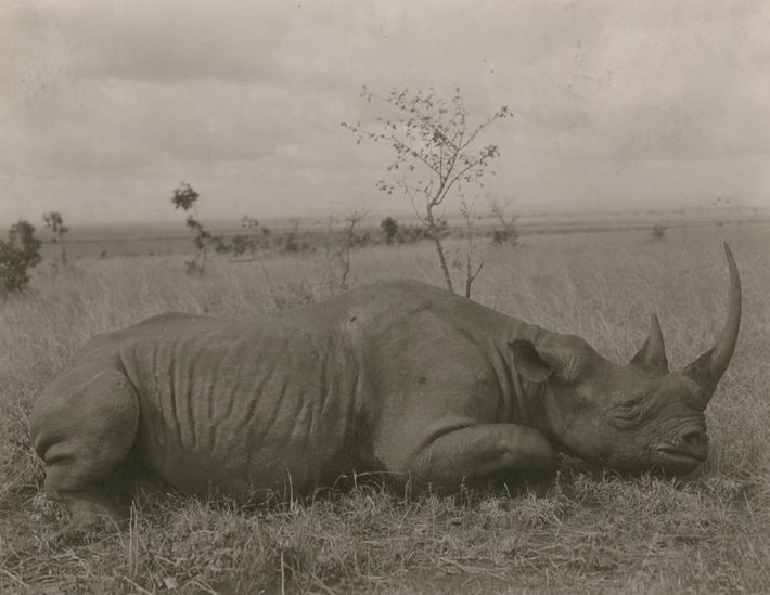 All five species of rhinos are threatened by poaching, and three of them are critically endangered. ...