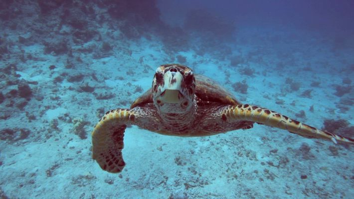 Climate 101: Oceans