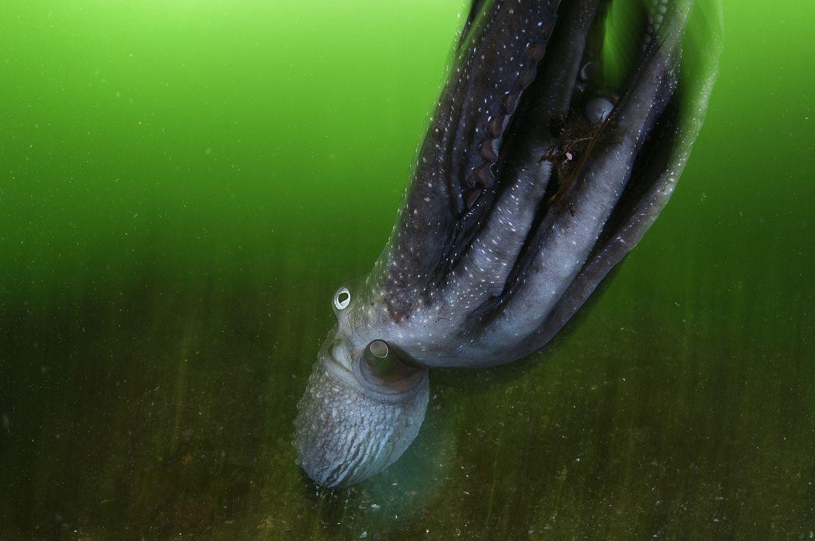 Underwater Greens