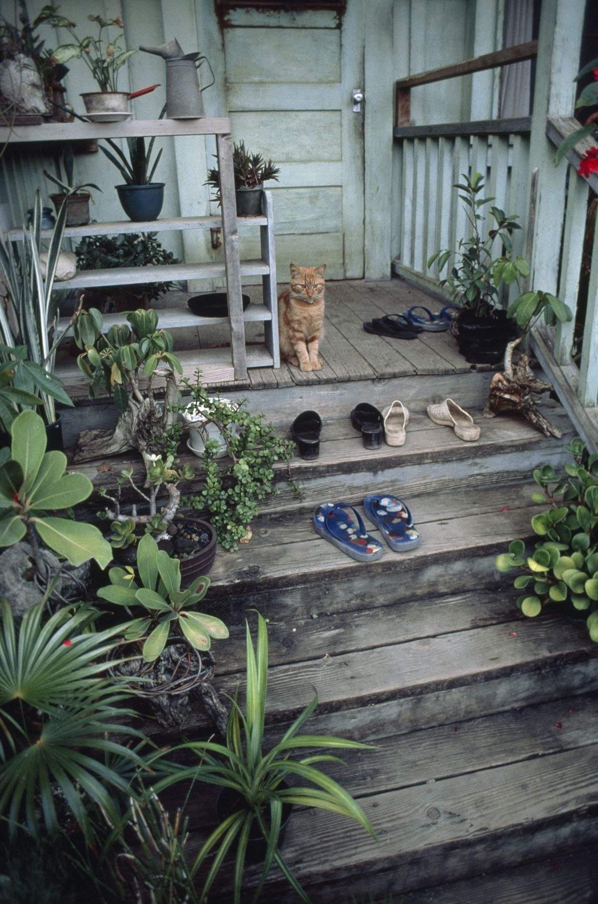 In this photo from a 1979 National Geographic, a cat contemplates paradise, or perhaps shoewear, from ...