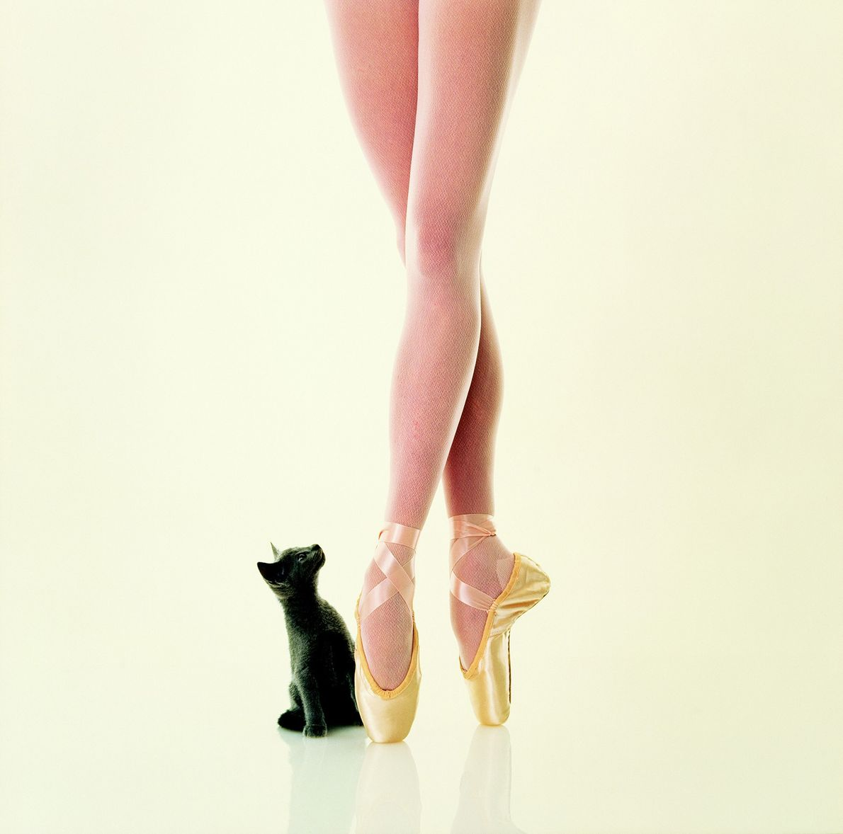 According to the 1997 National Geographic in which this photo ran, a cat's paw pads provide ...