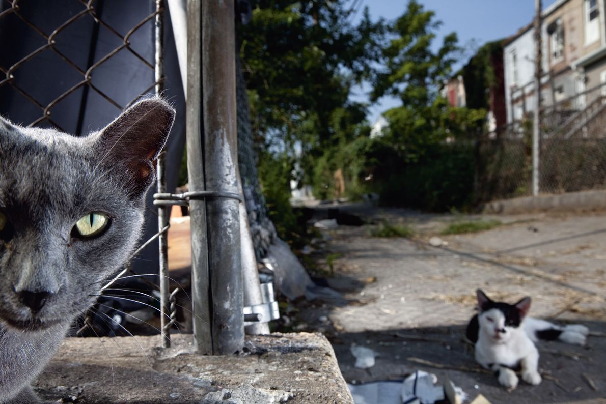 What are you looking at? Two feral cats glare at a camera-carrying intruder in a Baltimore ...