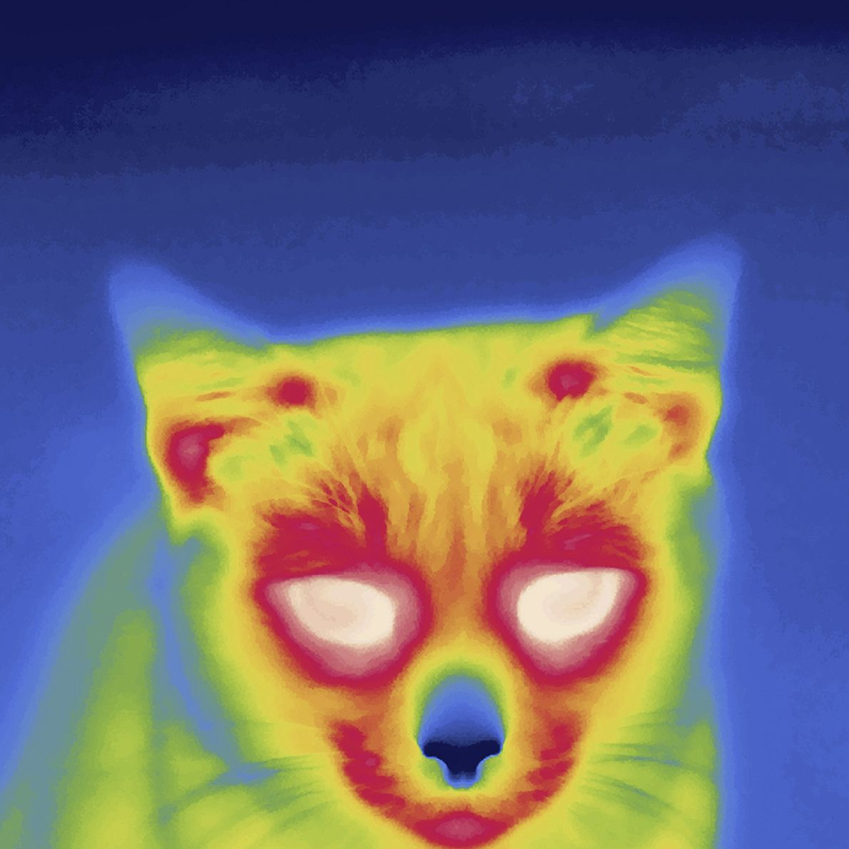 Although they're renowned for their night vision, cats can't compete with infrared light for piercing the ...