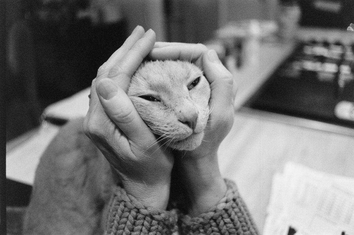 Perhaps we love our pets mostly because they put up with us. Here, a cat's face ...