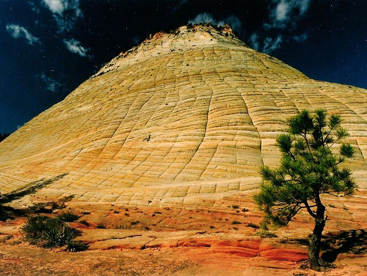 Horizontal furrows and vertical fractures in the bedrock give Checkerboard Mesa in Utah's Zion National Park ...