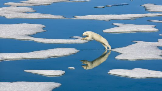 Spectacular Pictures of Polar Bears