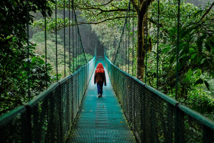 A hanging bridge at Selvatura Adventure Park in 2012. Normally the park, which is currently closed, ...