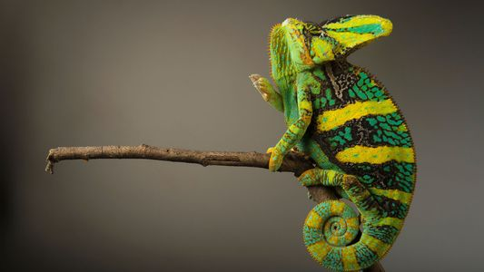 In Pictures: Amazing and Endangered Reptiles