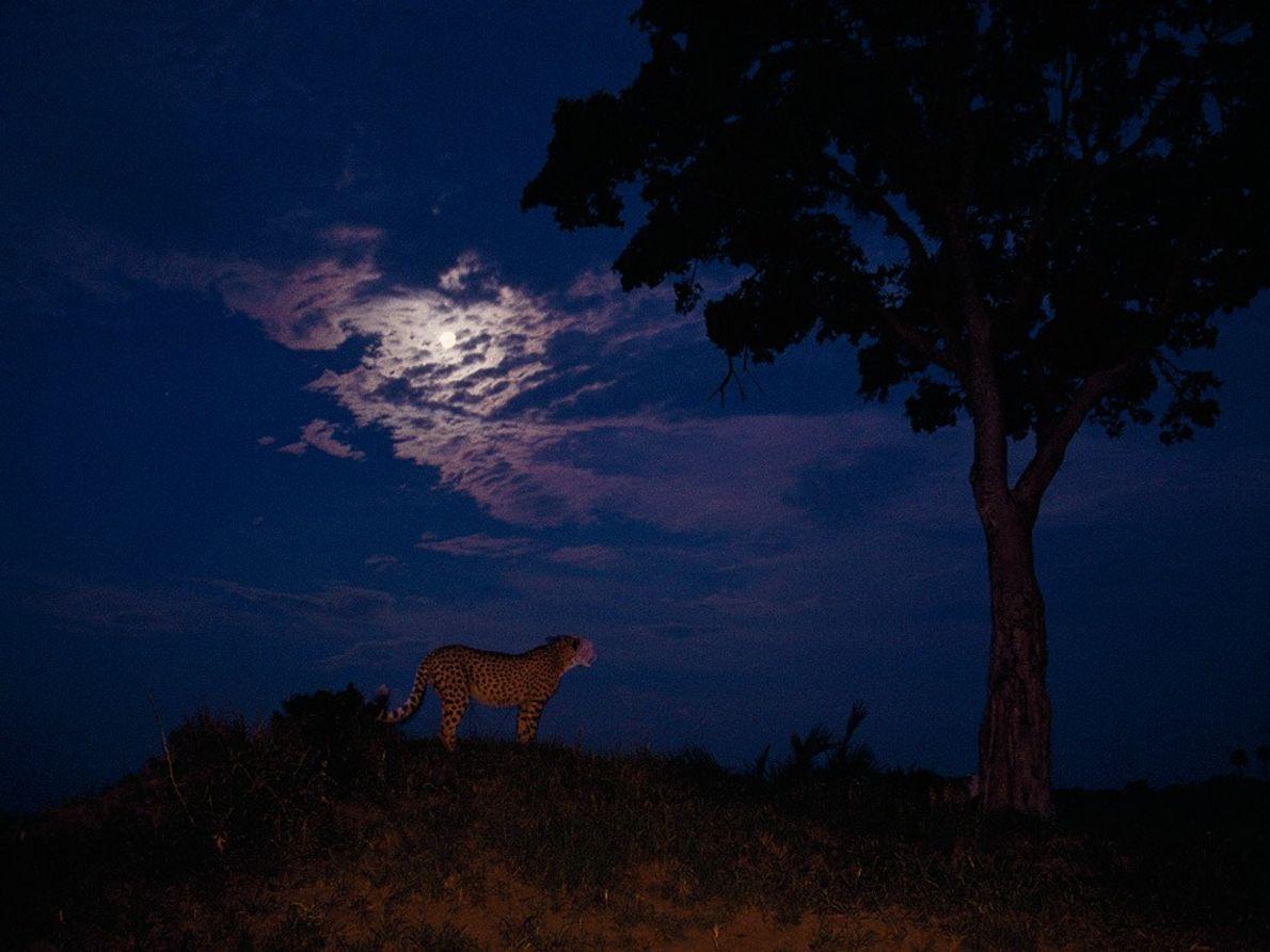 Moon and Cheetah