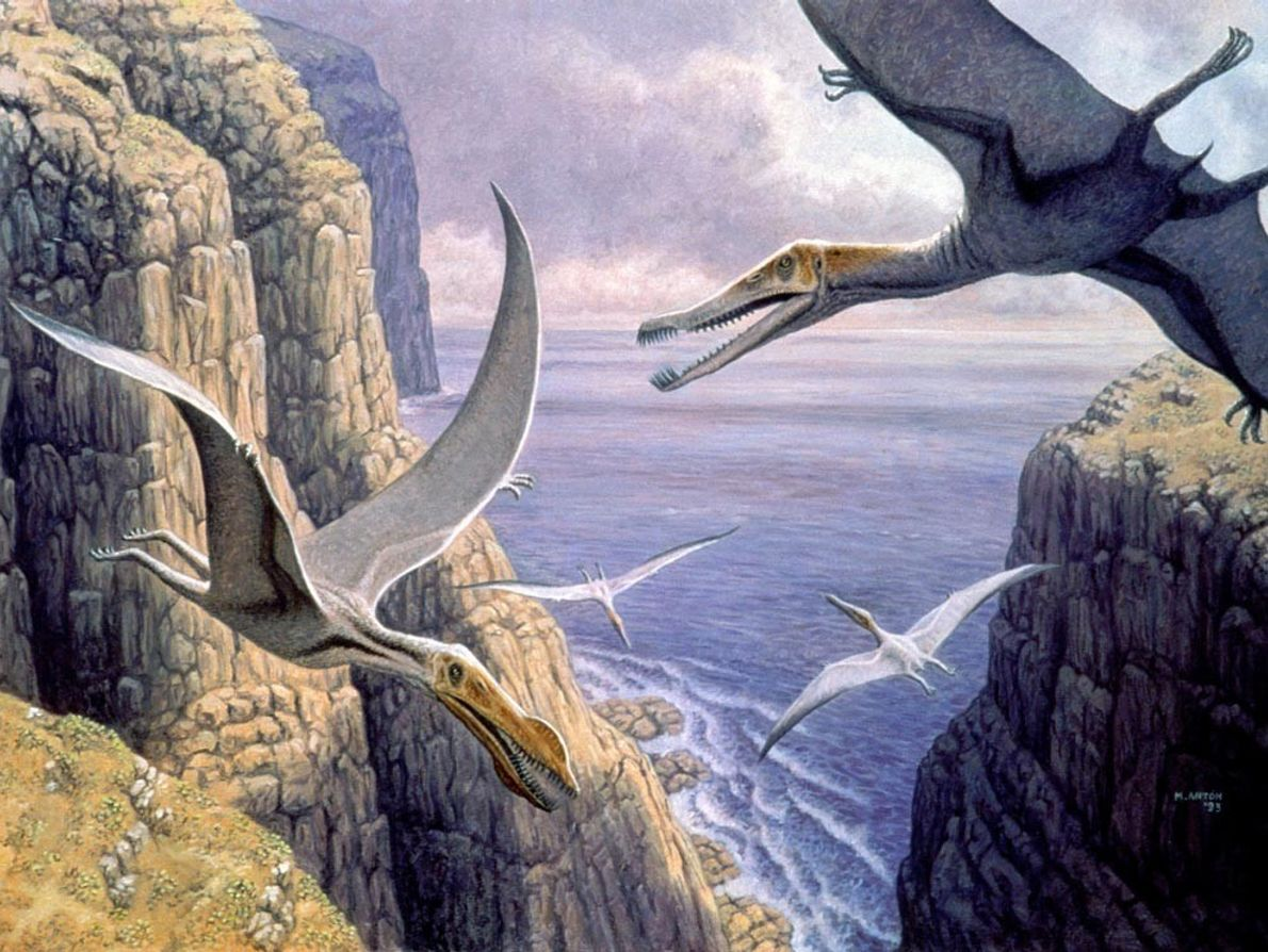 Pterosaurs, like these depicted gliding near an ancient sea, first arose during the Triassic period about ...