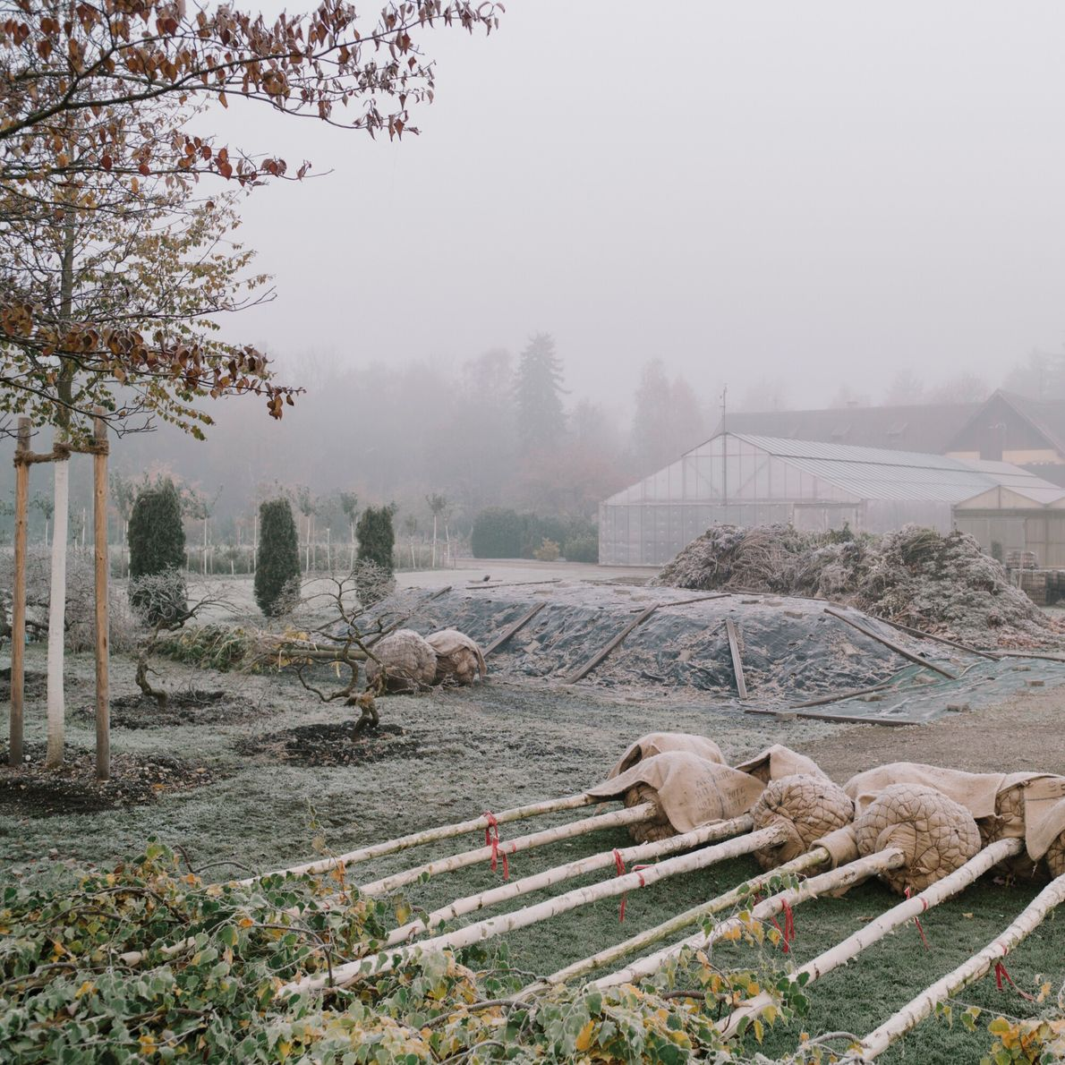 Germany, 2016: A herb garden and plantation, formerly a forced labour camp attached to Dachau. The ...