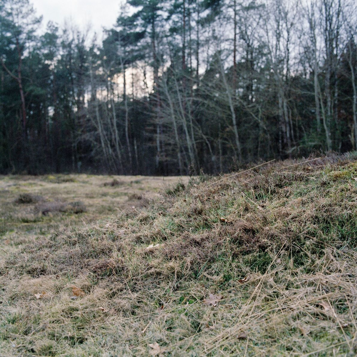 Germany, 2017: A mass grave at Bergen-Belsen concentration camp. In total over 50,000 people died at ...