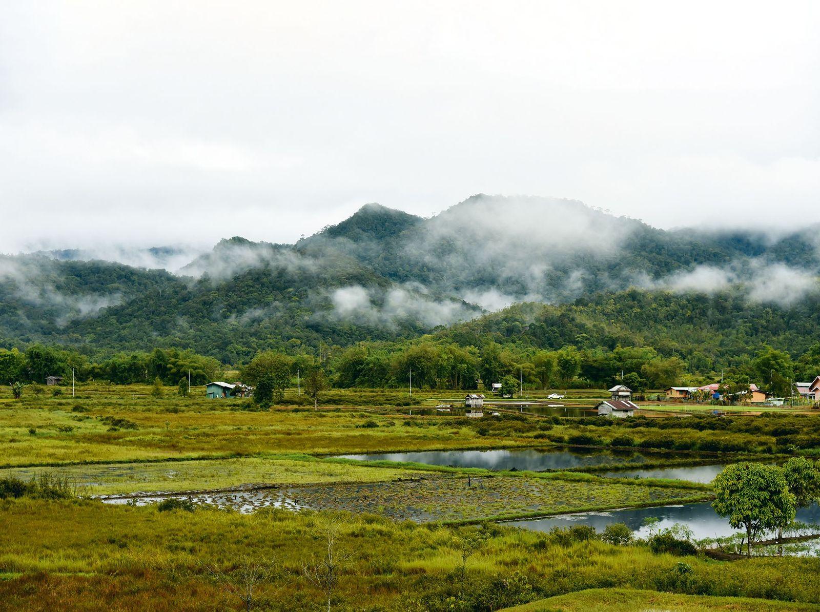 A hidden world deep within the Bornean jungle