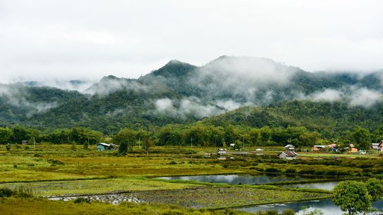 Views strech out across Bario's rice paddies.