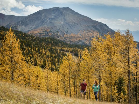 Planning a weekend in Banff? Plan it for Autumn