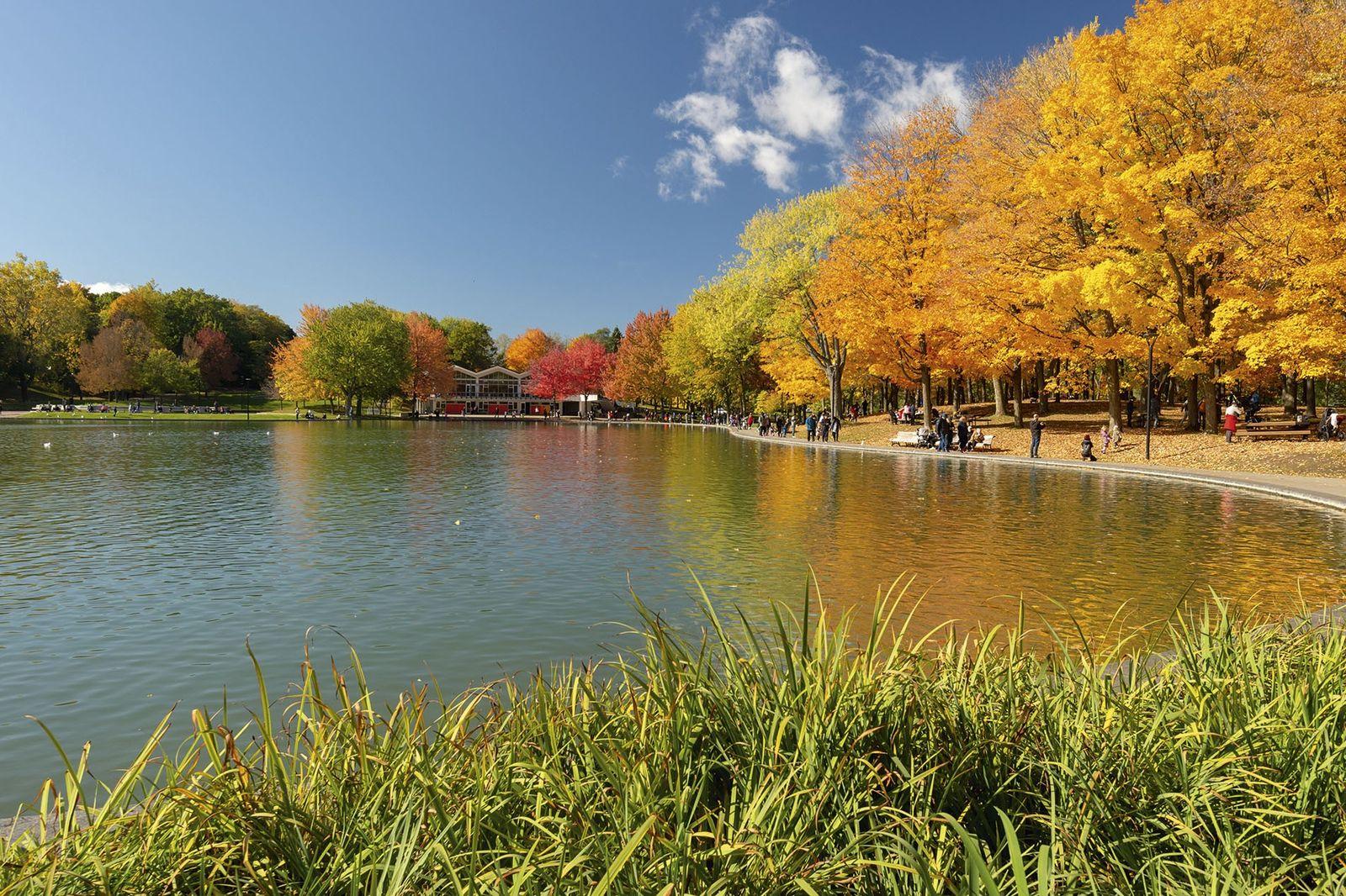 Beaver lake, Mont-Royal