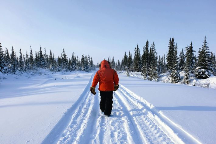 CNSC's scientific coordinator, LeeAnn Fishback, leads a tour into the boreal forest