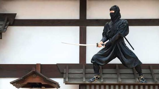 Japan: The ninja new wave