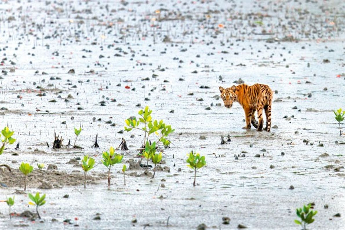 Go wild: India's best national parks for wildlife spotting