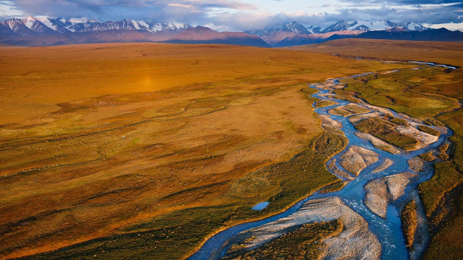 The coastal plain of Alaska's Arctic National Wildlife Refuge is home to caribou in spring and ...