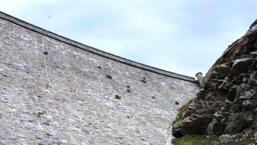 Amazing Footage Goats Climbing on a Near Vertical Dam