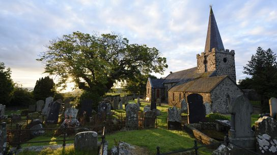 This Spanish Chestnut Tree stands in the churchyard of St Patrick's, Cairncastle, Northern Ireland and is ...
