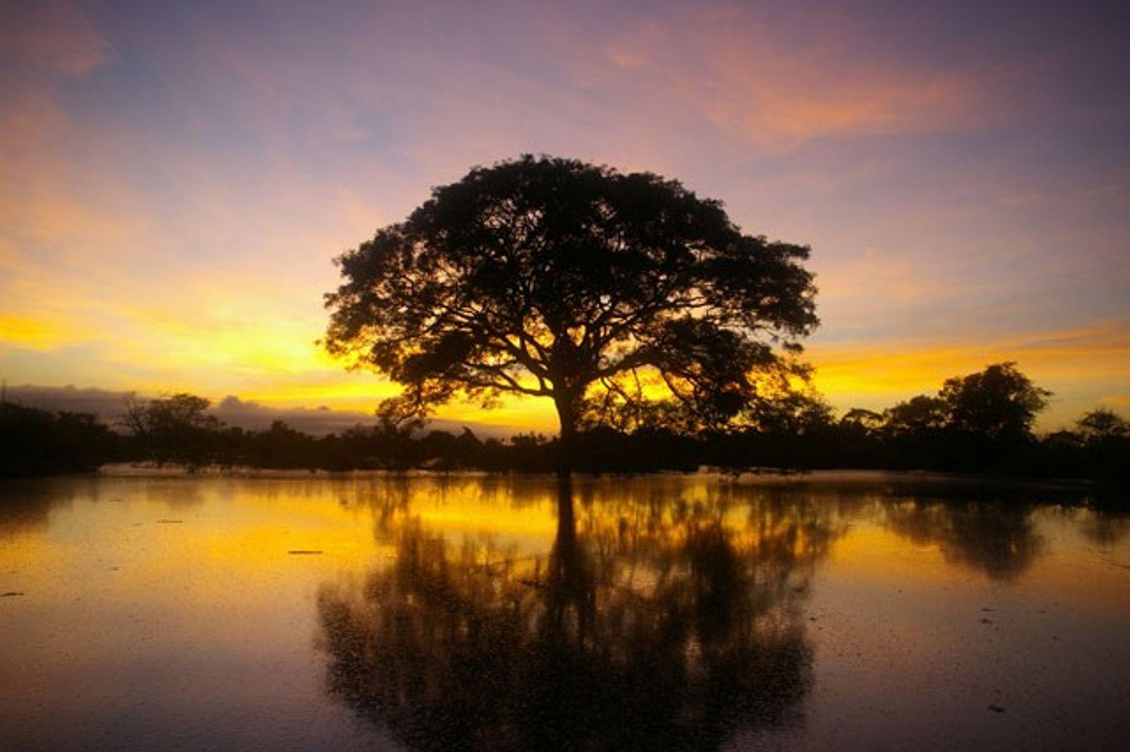 Bolivia: Down the Rio Yacuma