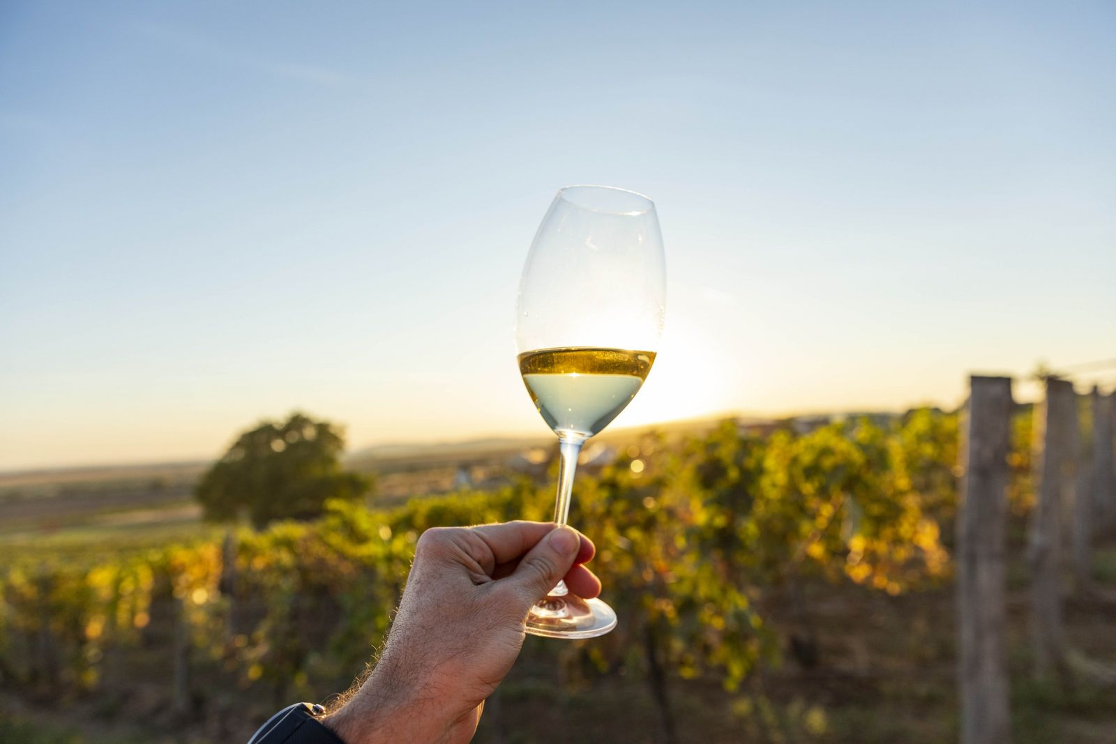 A winemaker in Tokaj enjoys a glass in the vineyards. The region's weather conditions dictate whether ...