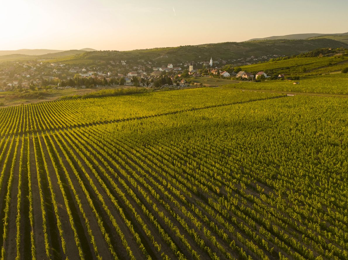 The village of Mád is surrounded by the most prized vineyards in Tokaj. The charming town ...