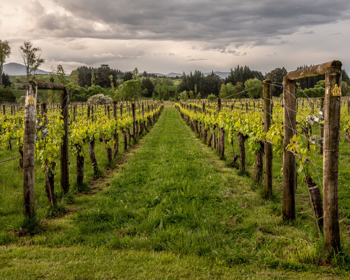 Neudorf Vineyards specialise in producing a variety of red and white wines including pinot noir, chardonnay, ...