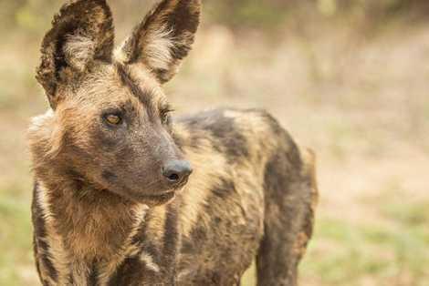 Safari: Beyond the Big Five