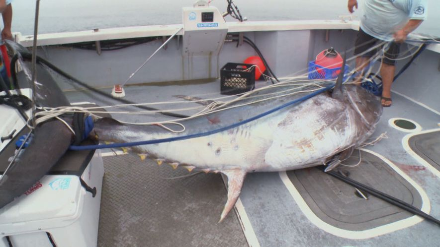 BIG big fish